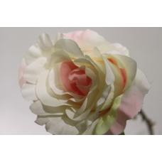 Роза высокая в ассортименте