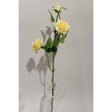 Роза кустовая высокая