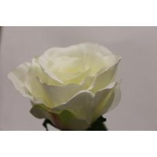 Роза средняя в ассортименте