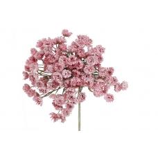 Соцветие  Гипсофилы розовое